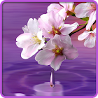 Water Drop. Flowers and Leaves icon