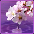 Gota de água. Flores e Folhas icon