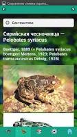Screenshot of EcoGuide: Russian Amphibians