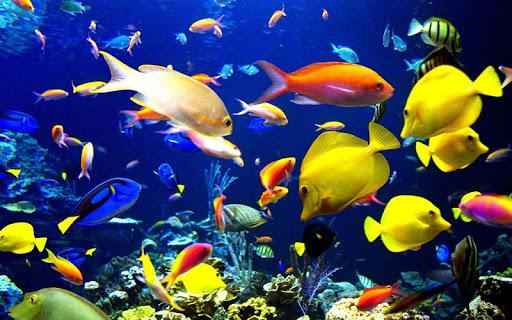 3D水族馆鱼类和植物