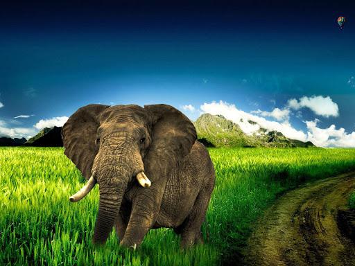 玩個人化App|象の壁紙免費|APP試玩