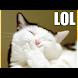 面白い爆笑ネコ