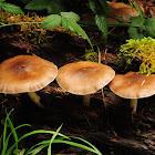Deer mushroom