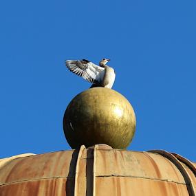 Goose on top of a golden globe by Birgit Vorfelder - Animals Birds ( bird, roof, blue sky, golden globe, gander, wings, dome, globe, animal, goose )
