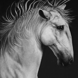 White horse by Mima Art - Drawing All Drawing ( pastel pencil portrait horse animal )