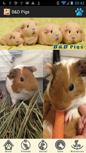 B D Pigs