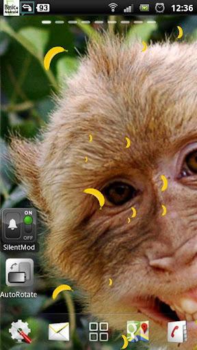 免费猴子的动态壁纸