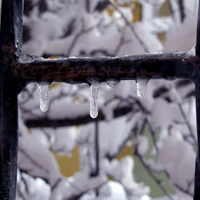 Freeze before dropping  by Suaib Akhter - Abstract Water Drops & Splashes ( snow fall, water, kar, waterdrop, freezing, sakarya, winter, window, freeze, ice, snow, cold temperature, turkey )