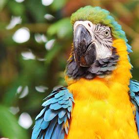 Polly want a cracker? by Anis Ghazalli - Animals Birds ( parrot, birds )