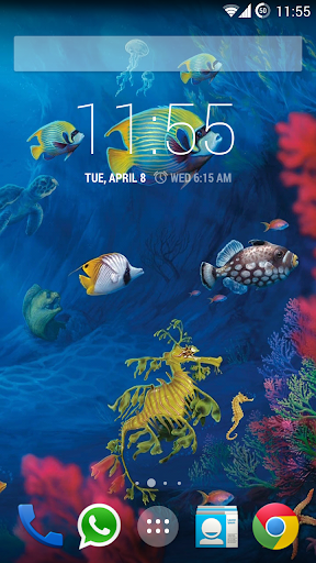 Koi HD Live Wallpaper Free