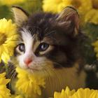 猫ジグソーパズル icon