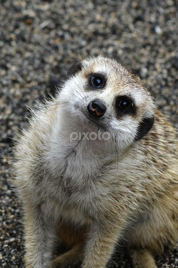 by Richard Idea - Animals Other Mammals