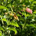 Bee (?)