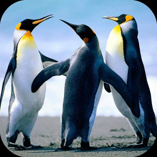 Penguin Live Wallpaper