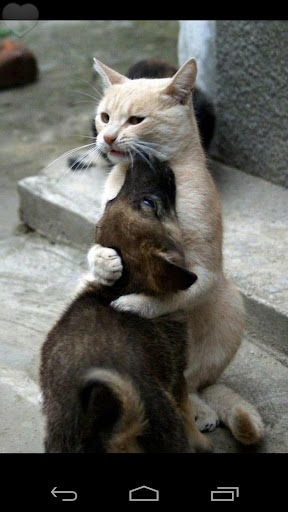 Cute and Funniest Animals Pics