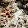 Necklace Sea Star