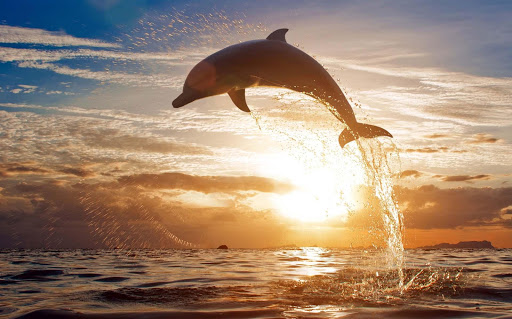 【免費工具App】Dolphin HD wallpaper-APP點子