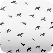 flying birds print wallpaper