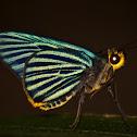 Green-striped Palmer