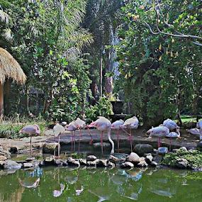 Flaminggo by Merah Putih - Animals Birds