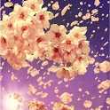 3D Sakura Live Wallpaper HD icon