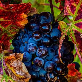 by Tom Reiman - Food & Drink Fruits & Vegetables ( color, colors, landscape, portrait, object, filter forge, , red, green )