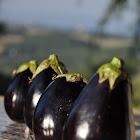 Eggplant (fruit)