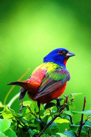 Download 3d Birds Live Wallpaper Google Play Softwares