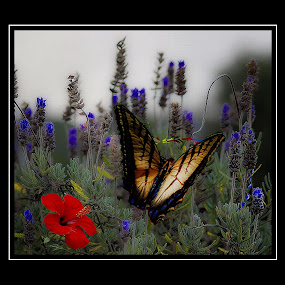 butterfly with blue flowers by John Kolenberg - Animals Insects & Spiders (  )