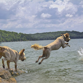 Jump sequence 1 by Ross Bolen - Animals - Dogs Playing