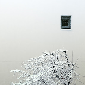 Bend by Andrei Diana - Black & White Objects & Still Life ( winter, tree, window, snow, black & white, bend, white, black,  )