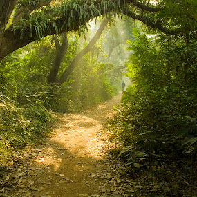 Morning rays by Victor Mukherjee - Landscapes Forests ( sunrays, trees, forest, morning, man, mist,  )