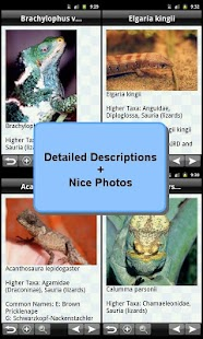 Reptiles Encyclopedia
