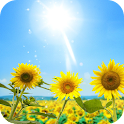 Tournesols Live Wallpaper icon