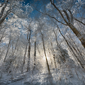 After The Storm by Robert Fawcett - Landscapes Weather ( winter, snow, trees, places, travel, landscape, sun,  )