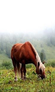 الخيول : الألغاز للأطفال والأس- screenshot thumbnail
