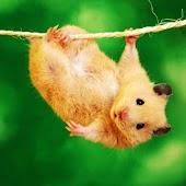3D cute hamster