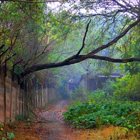The pat of Loneliness!! by Arnab Choudhury - City,  Street & Park  Street Scenes