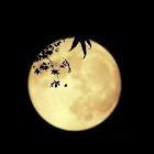 中秋燈謎集 icon