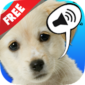 Sound Game with Fun Pets Photo