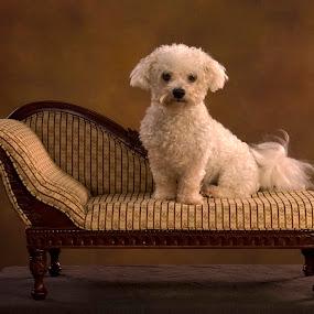 Oskar by Kelly Goode - Animals - Dogs Portraits ( #GARYFONGPETS, #SHOWUSYOURPETS )