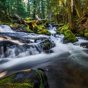 Panther Creek - Carson, WA by Gary Piazza - Landscapes Waterscapes ( water, gifford pinchot, washington, panther creek, waterfalls, creeks,  )