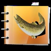 渓流釣り日記