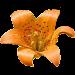 Yosemite Wildflowers Icon