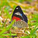 Navy Eighty Eight Butterfly