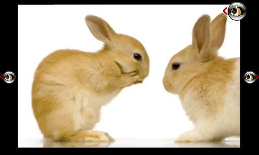玩休閒App|ウサギは子供を愛して免費|APP試玩