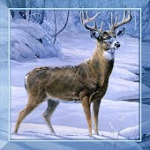 Winter Animals Live Wallpaper