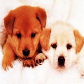 3D cute dog 66