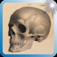 Vintage Anatomy Art Prints 1.0