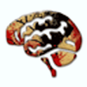 Anatomy of the Brain flashcard icon